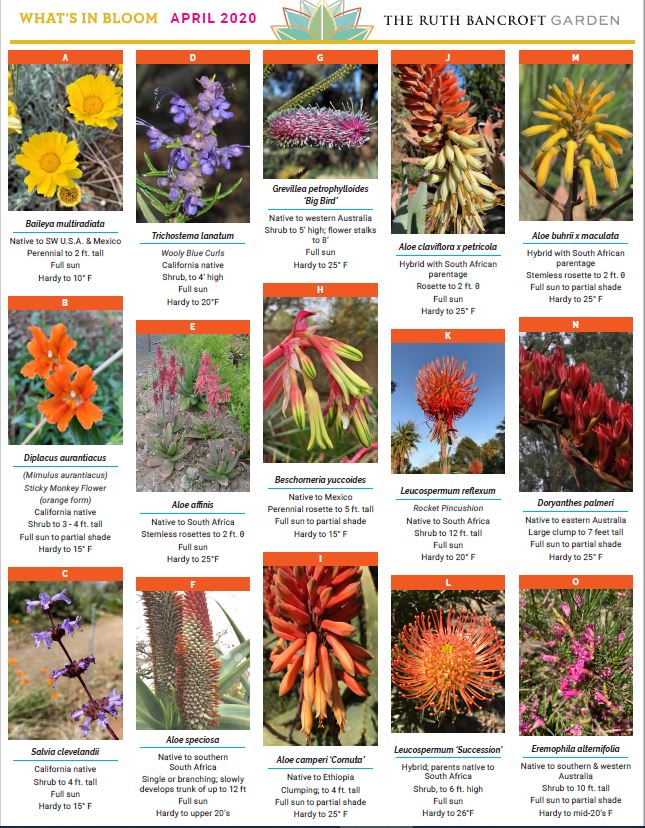What's In Bloom - April 2020
