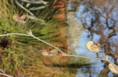 A strange piture like plant