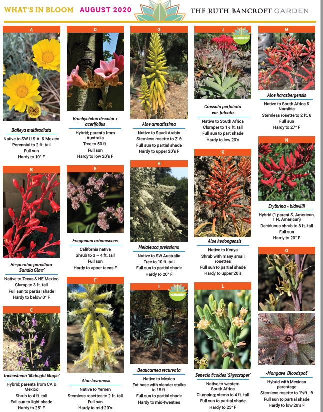 What's In Bloom - August 2020