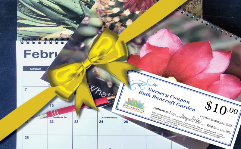 Membership offer calendar with bow