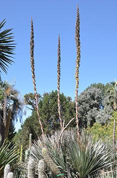 A plant wtih tall stalks aiming skywards
