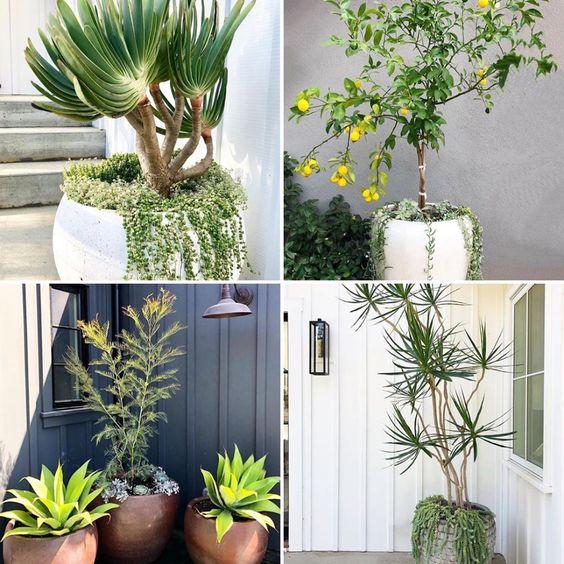 (Webinar) Basic Design Principles- Container Gardening ...