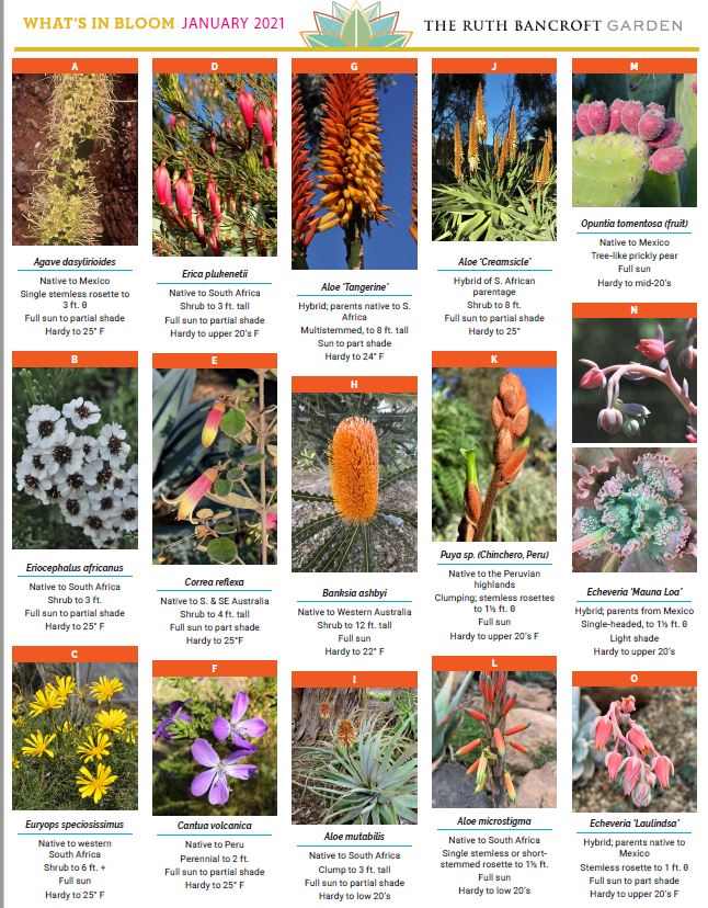 What's In Bloom - January 2021