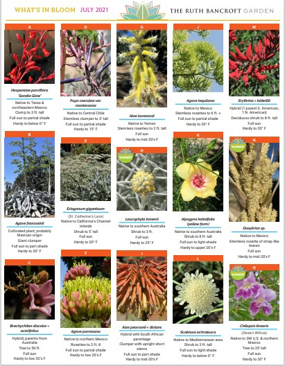 What's In Bloom - July 2021