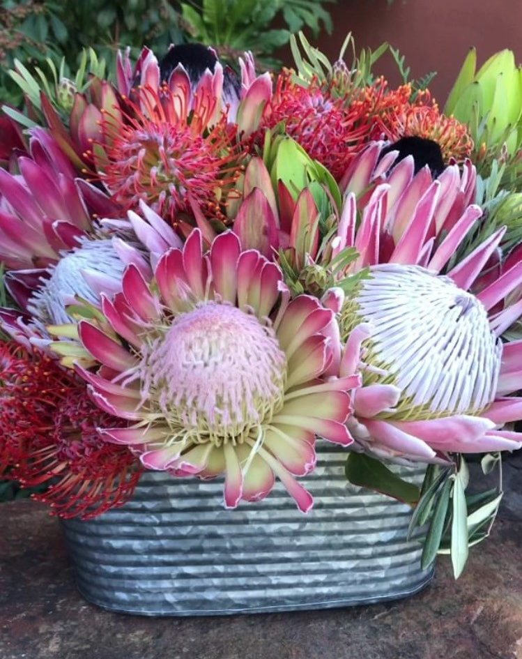 Valentine's Day Arrangement Lrg Protea in pewter-tone tin