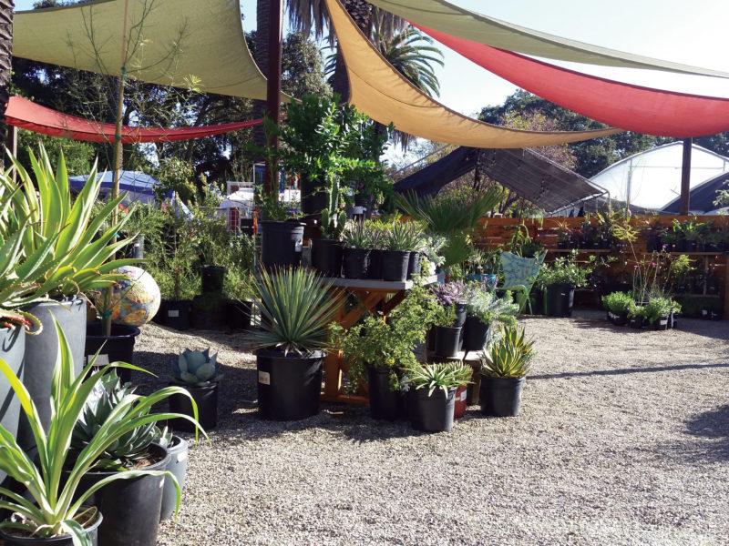 Ruth Bancroft Garden Nursery