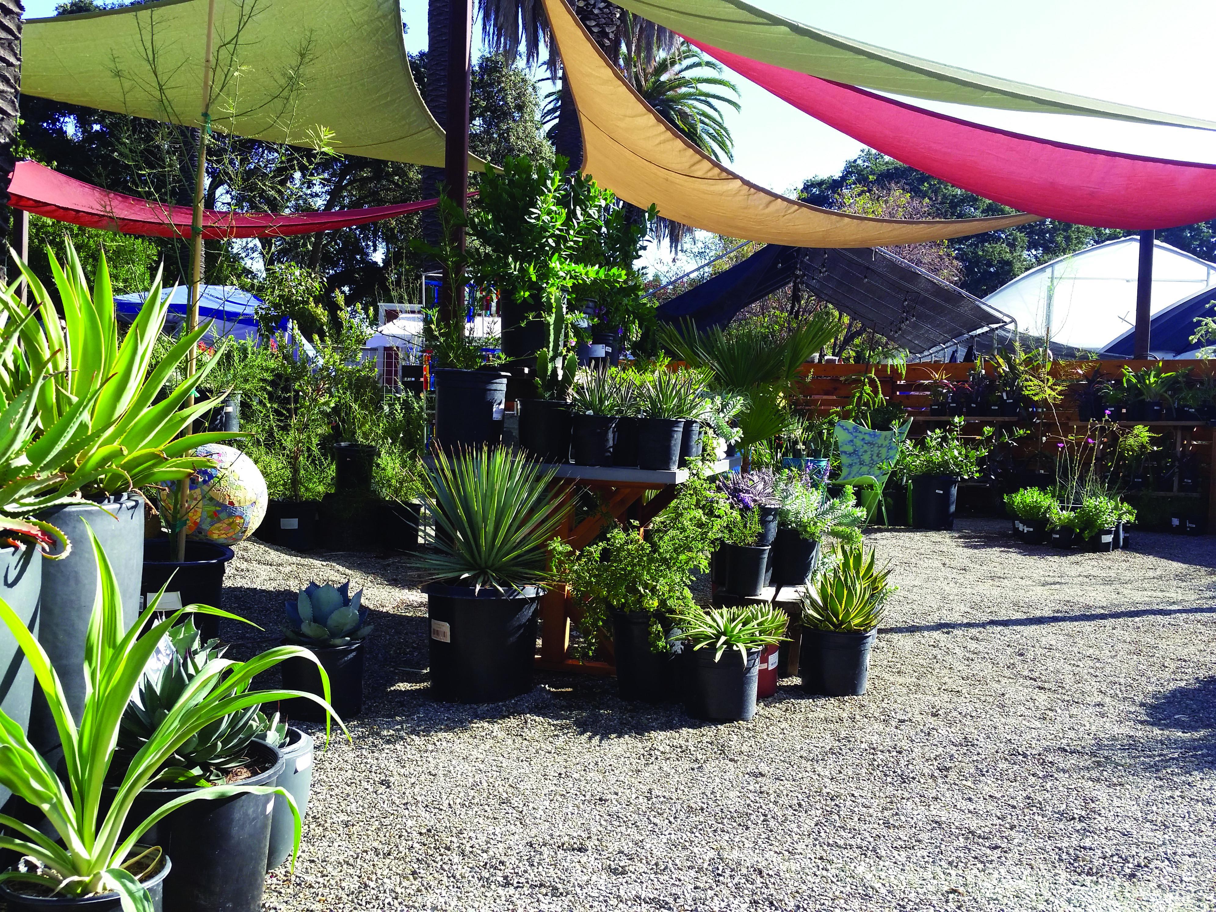 Order Plants Online The Ruth Bancroft Garden Nursery