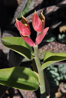 A stem with a vibrant pink flower at the end