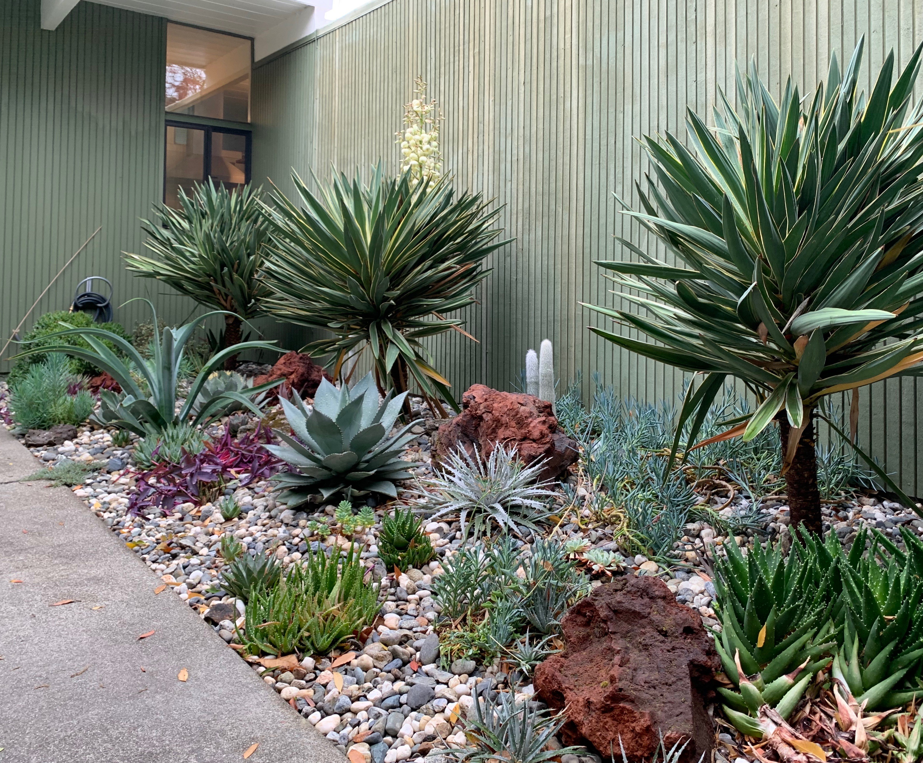 Basic Design Principles Small Spaces The Ruth Bancroft Garden