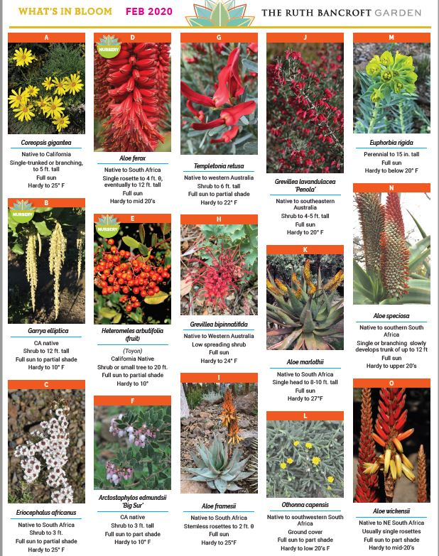 What's In Bloom - February 2020