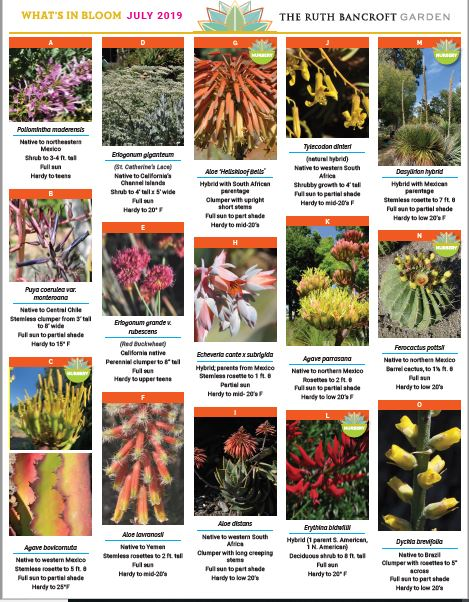 What's In Bloom - July 2019