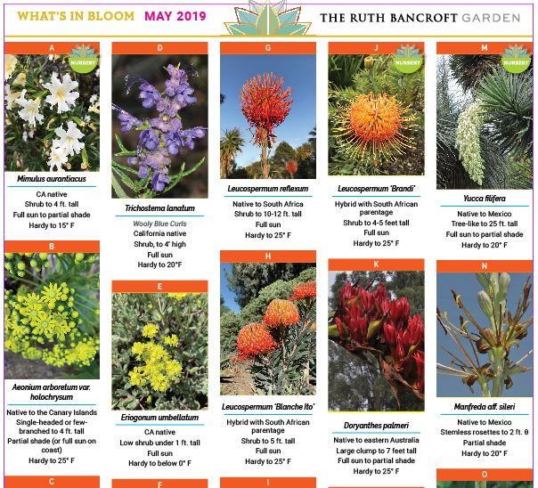 What's In Bloom - May 2019