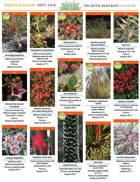 What's In Bloom - September 2018