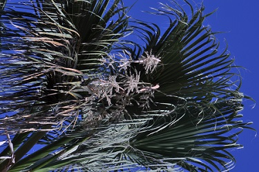 A close up of the leaves of a palm tree