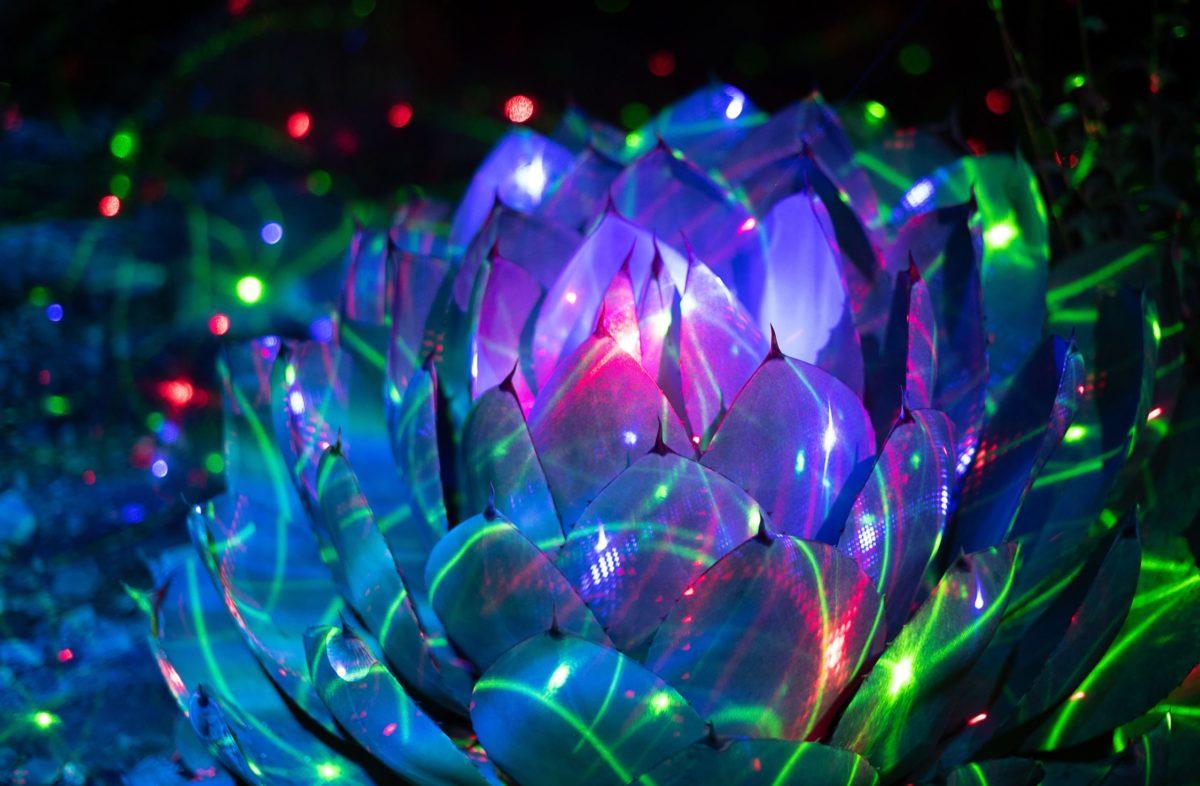 Garden of d'Lights Blue lit agave