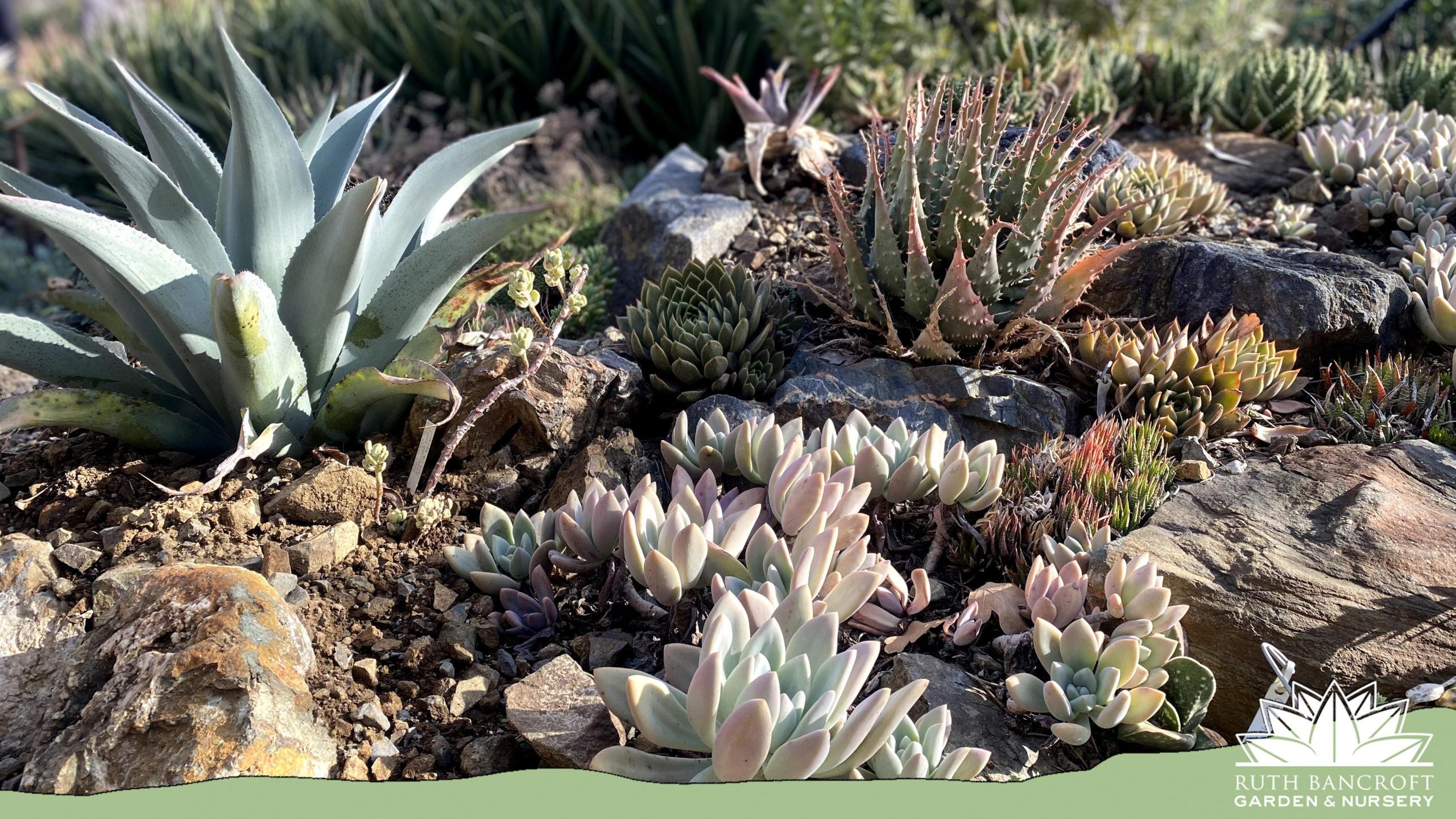 Succulent assortment