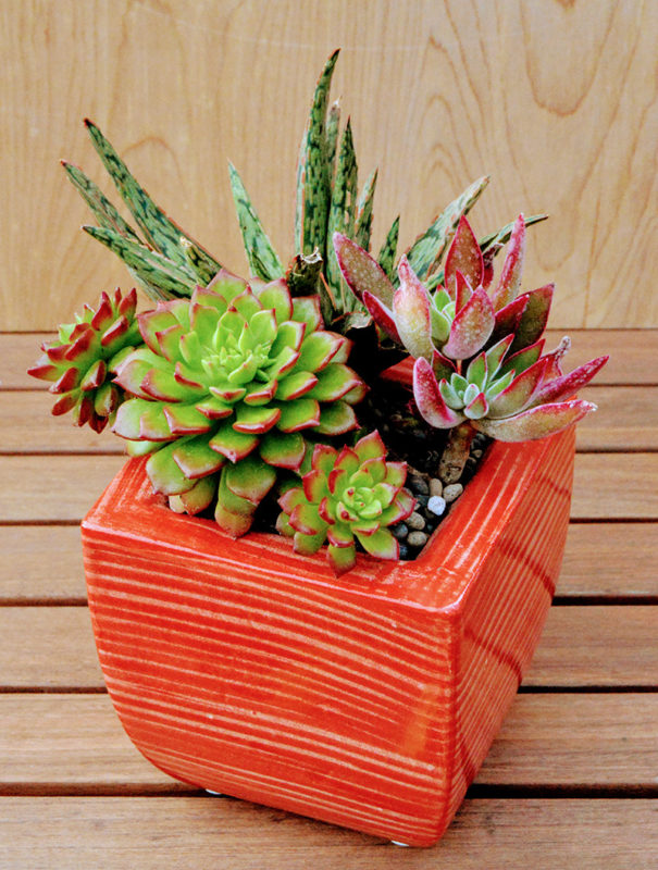 red ceramic pot filled with colorful succulents
