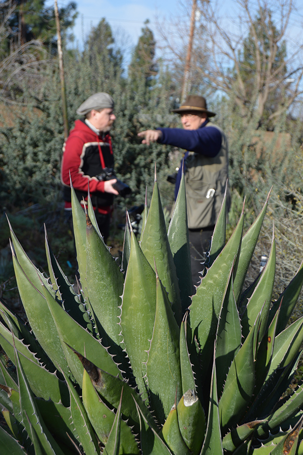 A large green spiky agave in the forefront and behind it two men stand. One has a big camera and is instructing the other on how to capture good photos