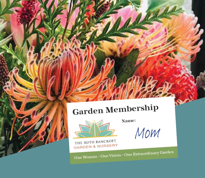 mothers-day-flowers-membership-