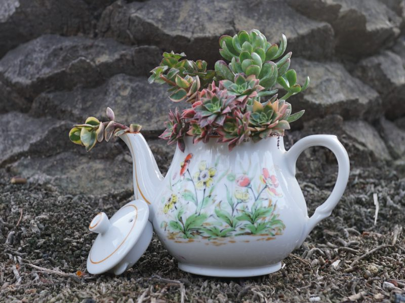 vintage teapot filled with an assortment of succulents