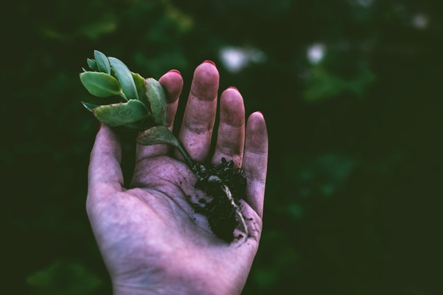 close up of a white hand holding a small succulent