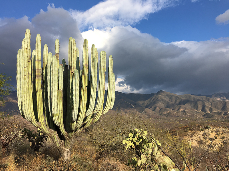 large green cactus in front of a view of large mountain range