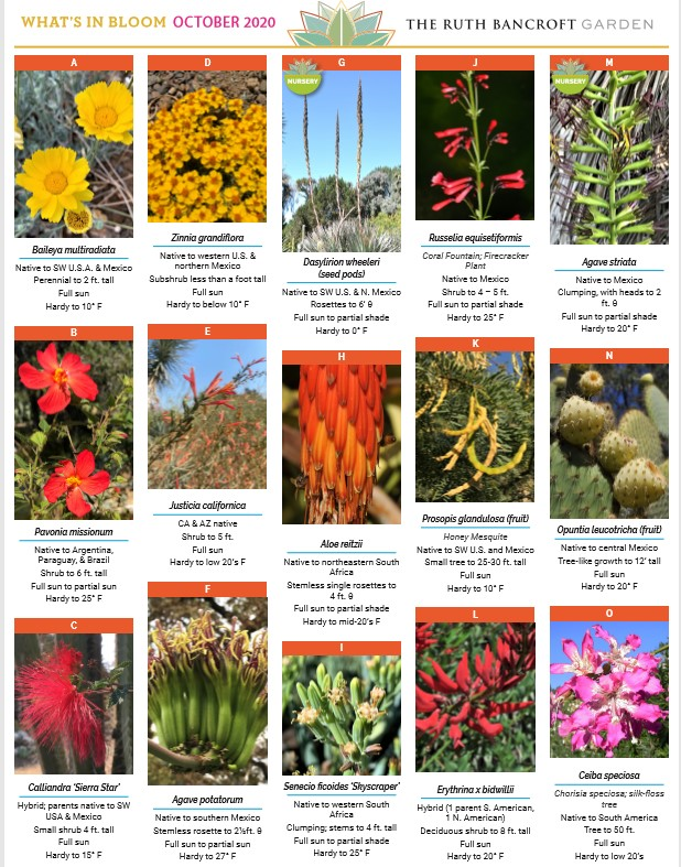 What's In Bloom - October 2020