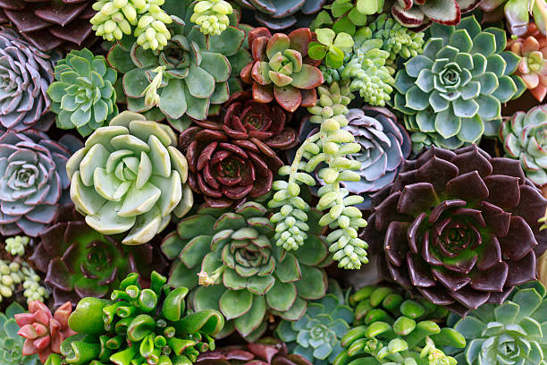 mix of green, blue, and dark colored succulents